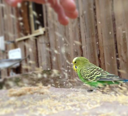 Vogelfüttern