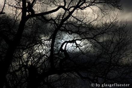 Baum by Glasgeflüster